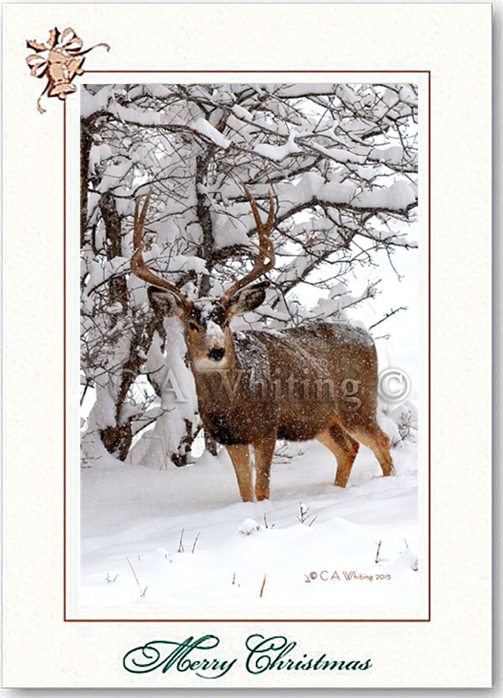 Wildlife Christmas Cards.Christmas Cards Wildlife And Scenic Images