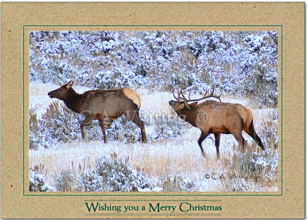 Christmas Cards | Wildlife and Scenic Images